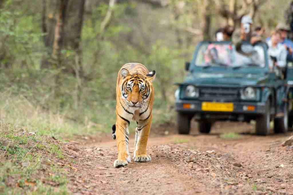 madhya pradesh wildlife tour package